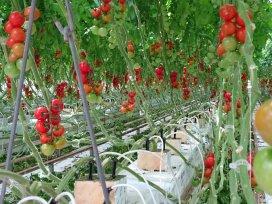 'ZZP-er in tomatenkas afgewezen'